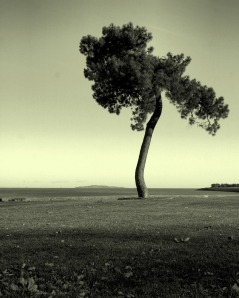 lone_tree_hdr